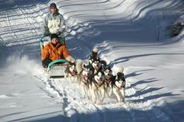 Picture of Dog Sledding and Snow Shoeing Experience