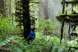 Picture of Vancouver Island Guided Rainforest Hiking Tour - Half Day