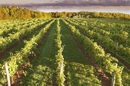Picture of Annapolis Valley Wine and Lunch Escape - WOLFVILLE departure