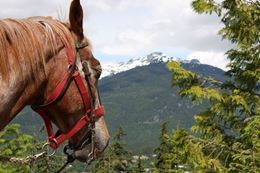 Half Day Birkenhead Lake Guided Horseback Ride with Cowboy Supper