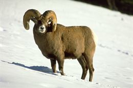 Picture of Banff and Its Wildlife Tour - Winter