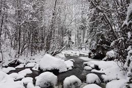 Vancouver Guided Snowshoeing Tour