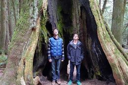 Vancouver Island Rainforest & Kayak Tour
