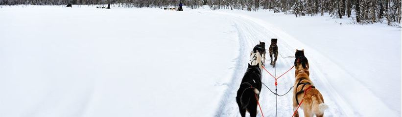 Picture for category Dog Sledding