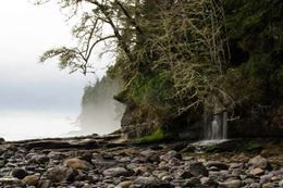 Vancouver Island Guided Rainforest Hiking Tour