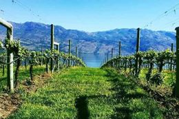 Experience a tour of wineries in Summerland, Okanagan Valley, BC