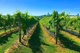 Vancouver Islands wineries tour and Saanich Peninsula