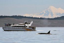 Picture of Victoria Whale and Wildlife Cruise