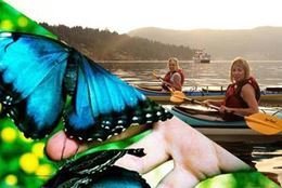 Picture of Brentwood Bay Kayak Tour and Victoria Butterfly Gardens Visit