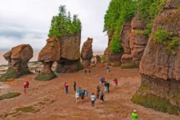 Picture of Best of Fundy with Hopewell Rocks Private Sightseeing Tour