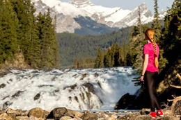 Banff and its Wildlife sightseeing tour summer