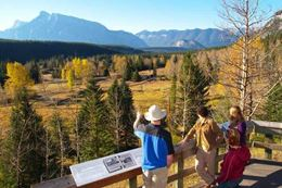 Summer things to do in Banff sightseeing tour wildlife