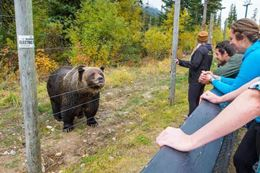 Banff sightseeing tour, Grizzly Bear Refuge