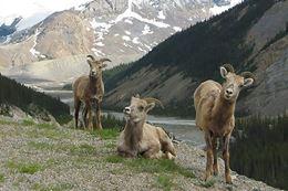 Banff Tour, Evening Wildlife Safari