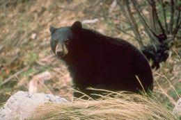 Bear on Banff Tour, Evening Wildlife Safari