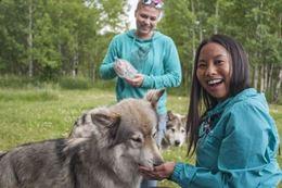 Yamnuska Wolfdog Sanctuary Tour, Cochrane Alberta