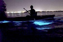Vancouver Island kayaking, Night Glow Tour Brentwood Bay