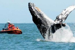 Whale Watching and Wildlife Tour, Cowichan Bay, Vancouver Island
