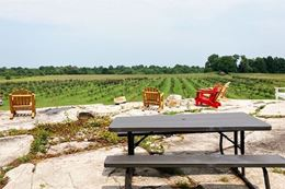 1000 Islands Helicopter Tour and BUSL Cidery tour, view of orchard