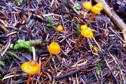 Vancouver Mushroom Foraging Rainforest Tour