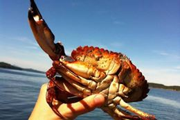 private Vancouver Crab Fishing Tour